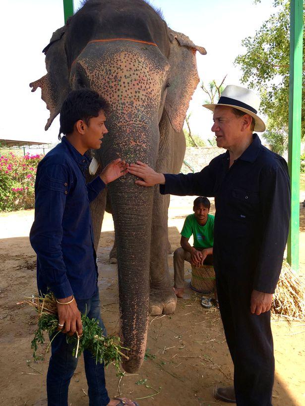 BBC facing fresh criticism over elephant tourism cruelty