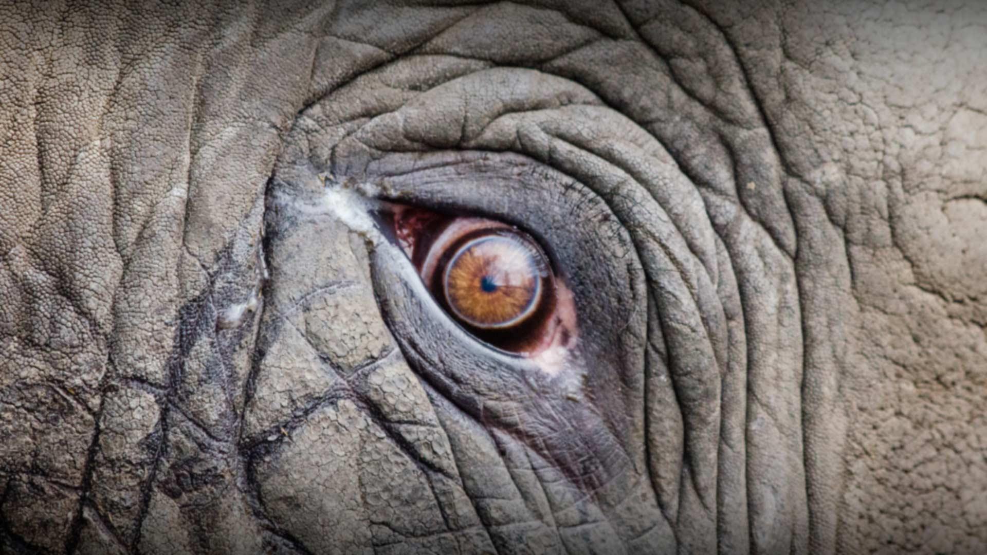 Samui Elephant Sanctuary, Thailand
