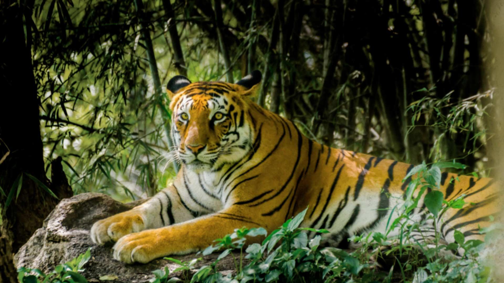 Tiger Sanctuary Review 1