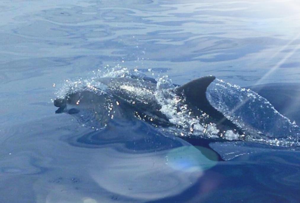 Whale Watch – Tenerife
