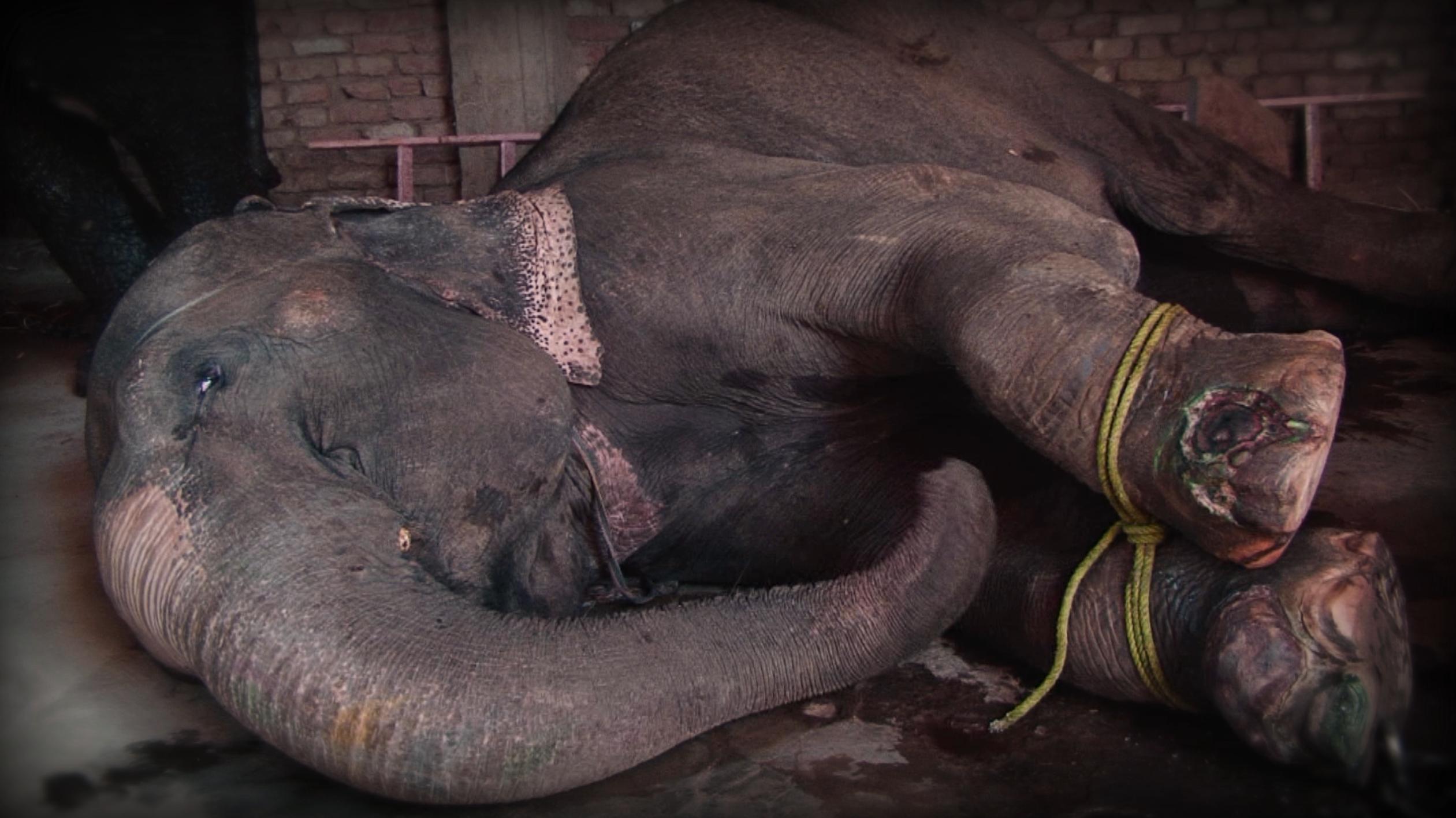 Ethical Bucket List warn of dark side of elephant rides