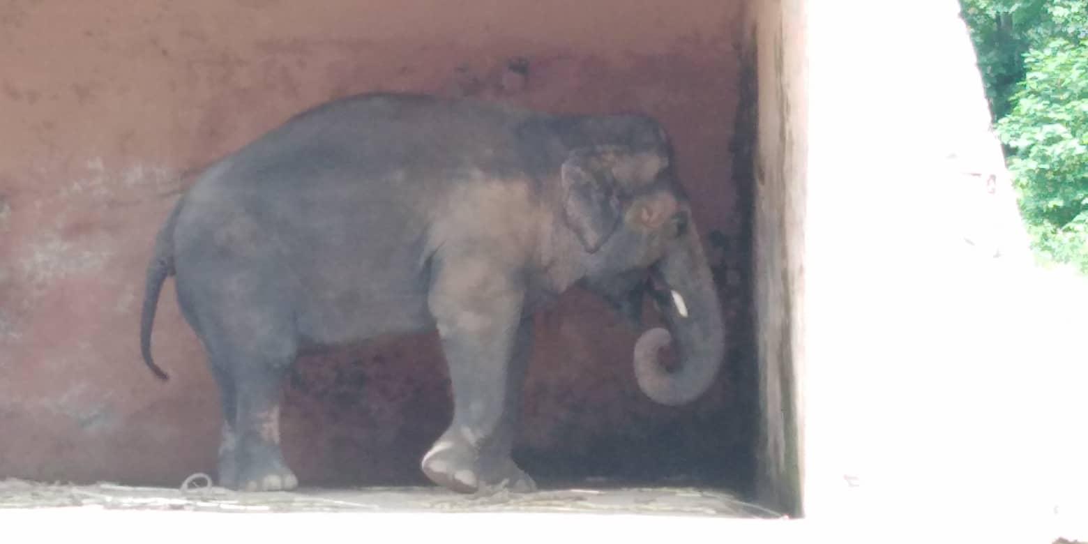 Islamabad Zoo, Pakistan