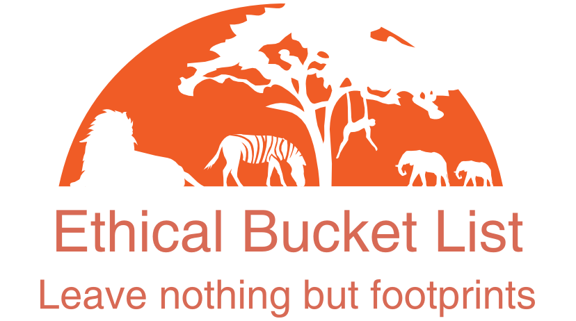 How an elephant helped to found Ethical Bucket List