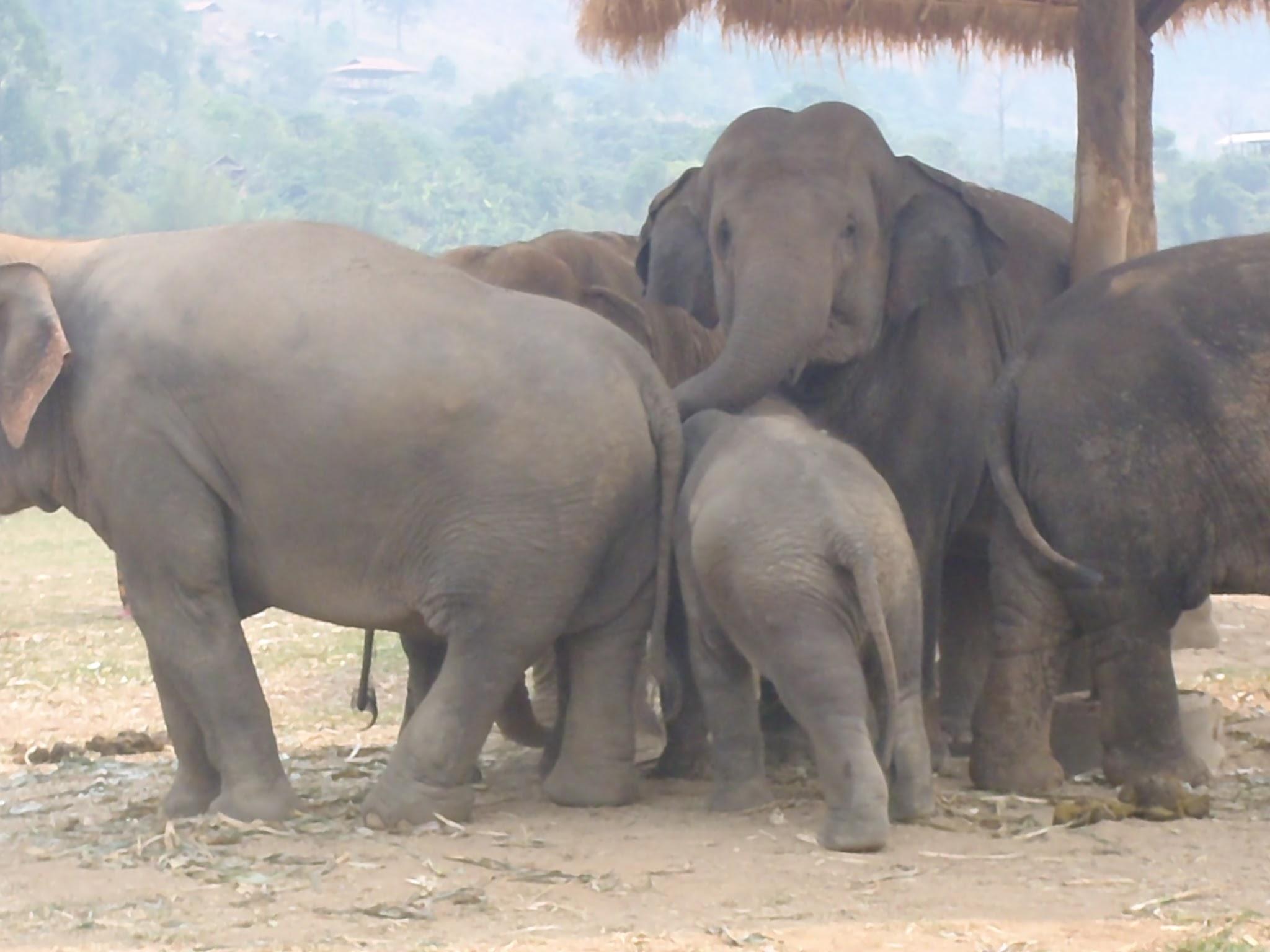 Elephant Nature Park – Chaing Mai, Thailand